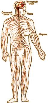 Воздействие электромагнитного излучения на человека
